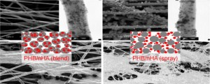 Biocomposite scaffolds based on electrospun poly(3-hydroxybutyrate) nanofibers